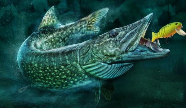 Рыболовные и охотничьи магазины